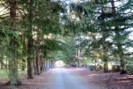 cedarsoflebanonallee